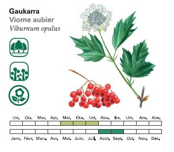 Mini_guide_arbres_et_arbustes_de_txingudi